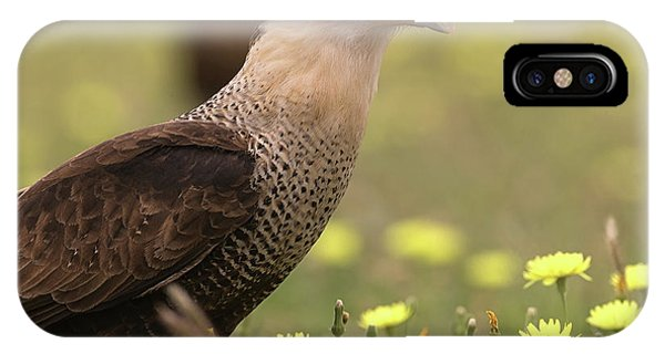 Caracara In Wildflowers IPhone Case