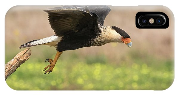 Caracara Taking Off IPhone Case