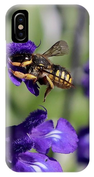 Carder Bee On Salvia IPhone Case