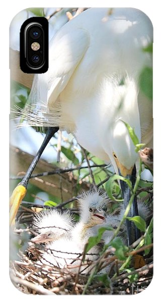 iPhone Case - Careful Egret Mom With Chicks by Carol Groenen