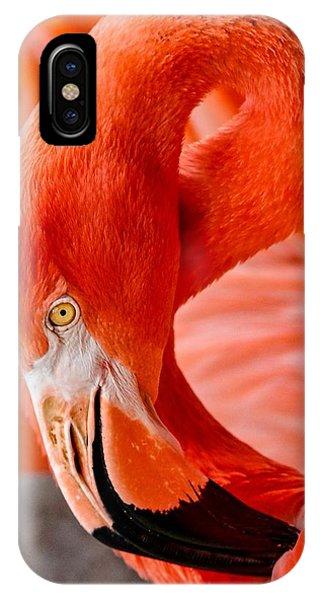 Caribbean Flamingo IPhone Case