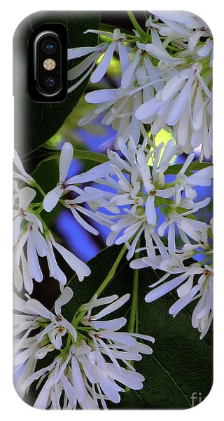 IPhone Case featuring the photograph Carly's Tree - The Delicate Grow Strong by Rick Locke