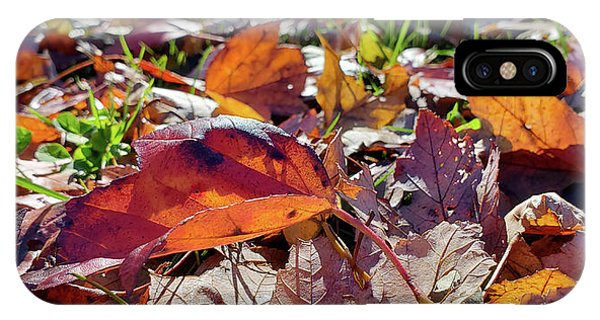 Carpet Of Fall Colors IPhone Case