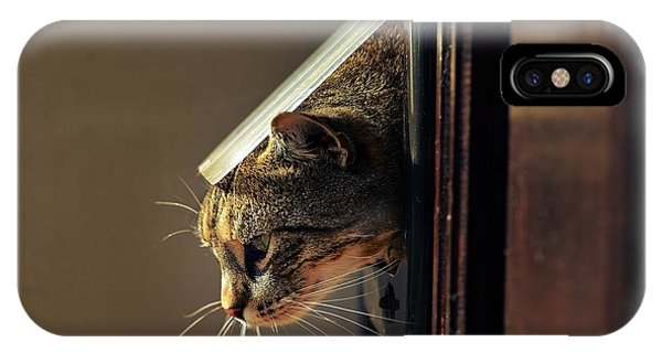 Adorable iPhone Case - Cat Crawls Out Of The House Through A by Davidtb