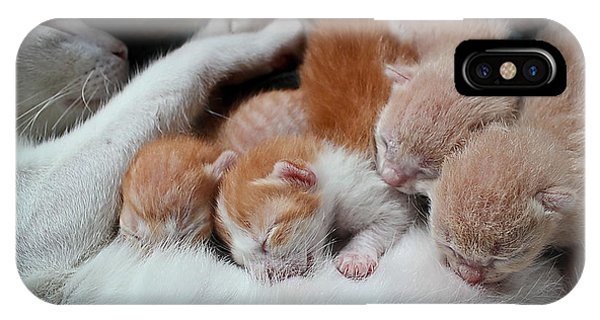 Eating iPhone Case - Cat Nursing Her Kittens by Grey Carnation