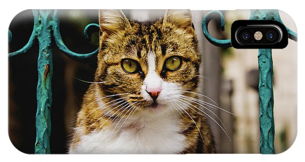Cat On A Fence IPhone Case