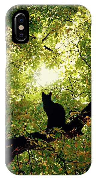 Kitten iPhone Case - Cat On A Tree by Cambion Art