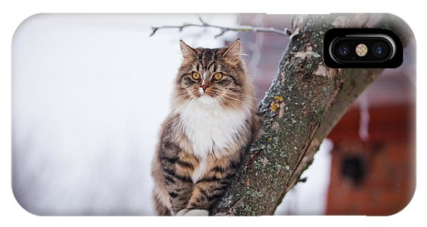 Winter iPhone Case - Cat Outdoors In The Winter Is On The by Dezy