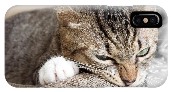 Cat Scratching And Biting.claws On The Phone Case by Yimmyphotography