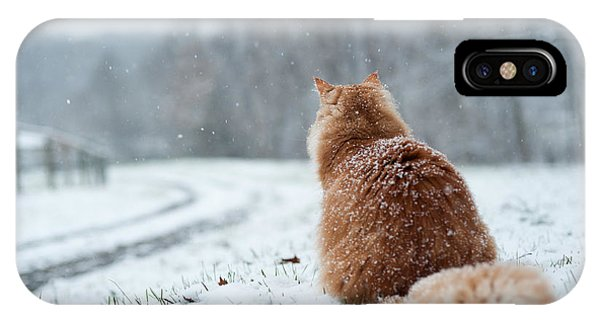 Adorable iPhone Case - Cat Waiting At Driveway During Snow by Jon Beard