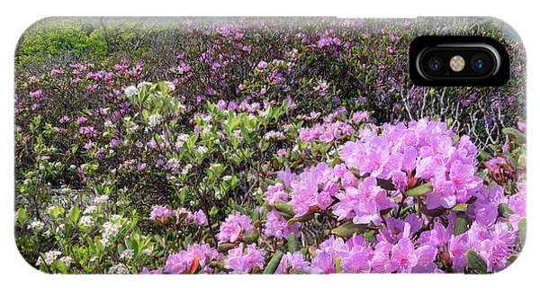 Catawba Rhododendron Table Rock  IPhone Case