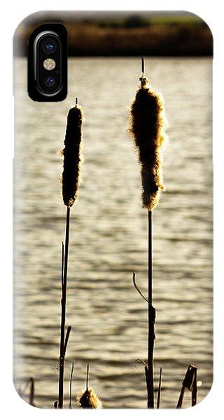 Cattails In The Sun IPhone Case