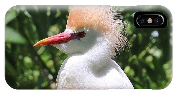iPhone Case - Cattle Egret Profile by Carol Groenen