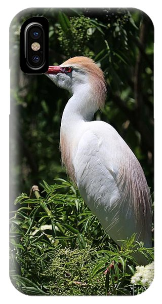 iPhone Case - Cattle Egret With Breeding Feathers by Carol Groenen