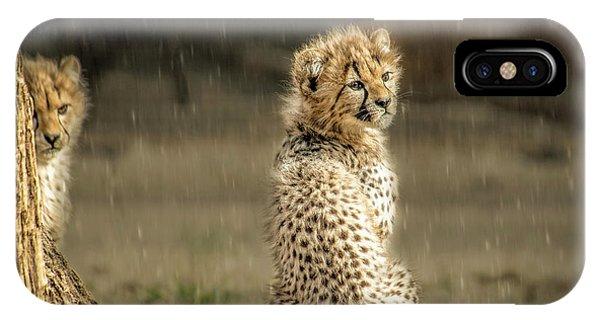 Cheetah Cubs And Rain 0168 IPhone Case