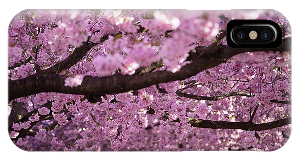 Blossoms iPhone Case - Cherry Blossom Tree Panorama by Nicklas Gustafsson