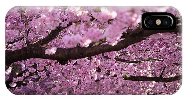 Blossom iPhone Case - Cherry Blossom Tree Panorama by Nicklas Gustafsson