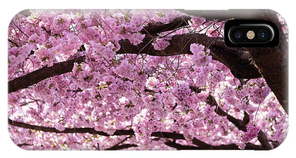 Blossom iPhone Case - Cherry Blossom Trees by Nicklas Gustafsson