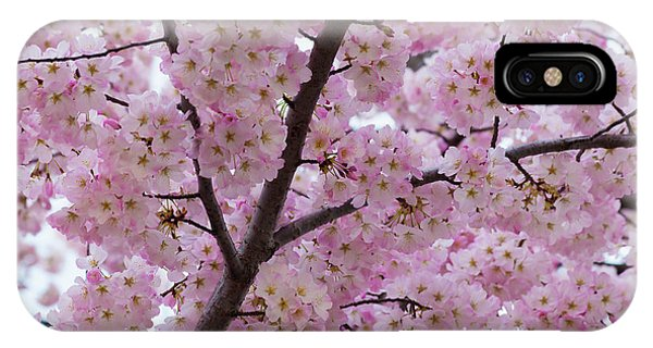 Cherry Blossoms 8611 IPhone Case