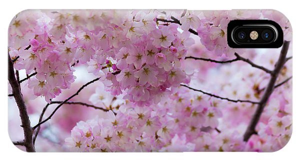 Cherry Blossoms 8625 IPhone Case
