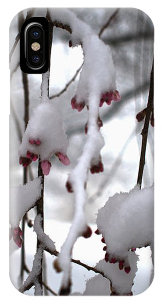 Cherry Blossoms In Snow IPhone Case