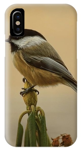Chickadee On Rhododendron IPhone Case