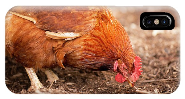 IPhone Case featuring the photograph Chicken On The Farm by Rob D Imagery