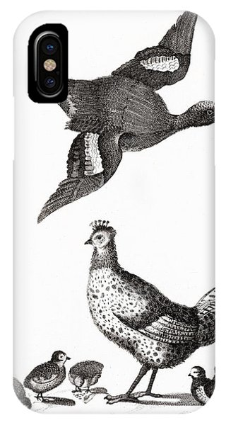 Protein iPhone Case - Chickens And A Duck By Johan Teyler  1648-1709  by Johan Teyler