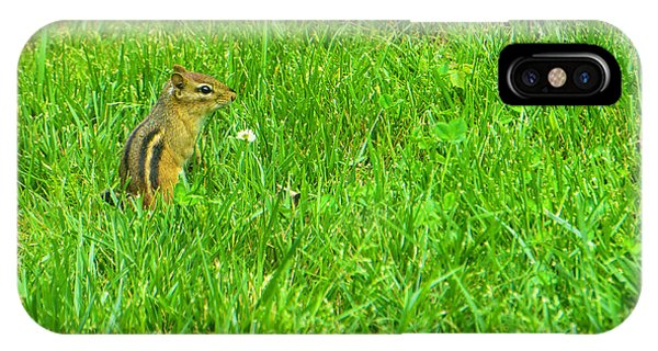 Chipmunk And The Flower IPhone Case