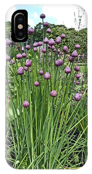 Chorley. Astley Hall. Walled Garden Chive Flowers. IPhone Case