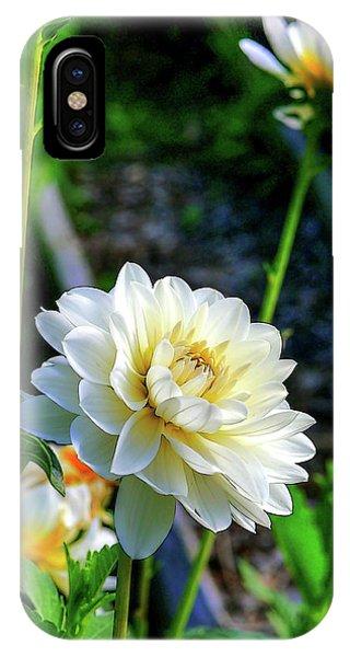 Chrysanthemum In Bloom IPhone Case