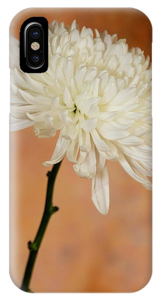 Chrysanthemum On Canvas IPhone Case