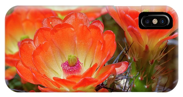 Claret Cup Cactus Flowers, Echinocereus Phone Case by Adam Jones