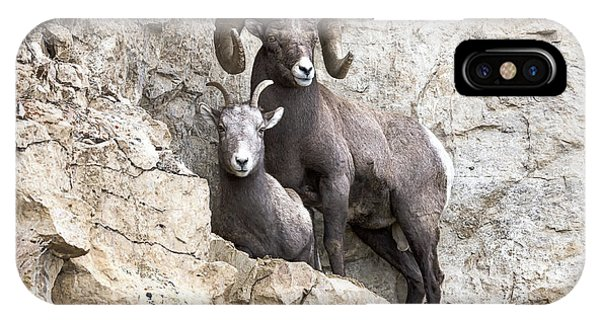 Rocky Mountain Bighorn Sheep iPhone Case - Cliff Notes by Scott Warner