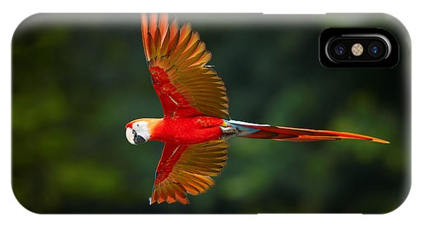 Adorable iPhone Case - Close Up Ara Macao, Scarlet Macaw, Red by Martin Mecnarowski