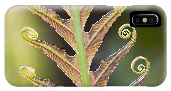 Botanical Garden iPhone Case - Close-up Of A Giant Fern On A Sunny by Artmannwitte