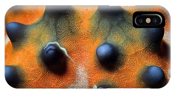 Dive iPhone Case - Close-up Of A Knobbly Sea Starhorned by Andaman