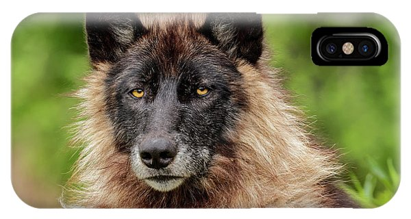 Close-up Of Adult Male Gray Wolf, Canis Phone Case by Adam Jones