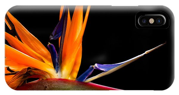 Blossom iPhone Case - Close-up Of Colorful Strelitzia Flower by Johan Swanepoel