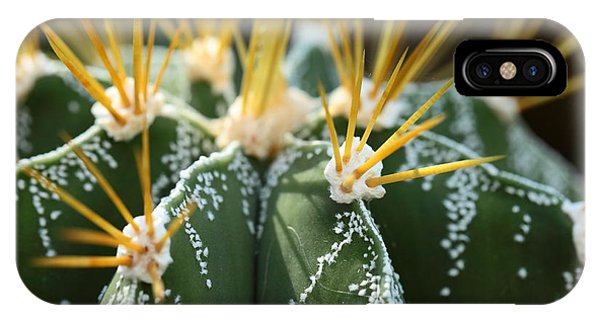 Botanical Garden iPhone Case - Close Up Of Globe Shaped Cactus With by Curioso