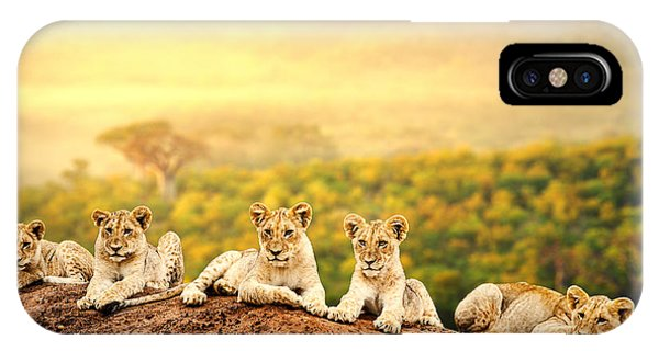 Sister iPhone Case - Close Up Of Lion Cubs Laying Together by Karelnoppe