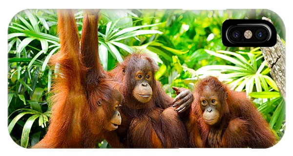 Eating iPhone Case - Close Up Of Orangutans, Selective Focus by Tristan Tan