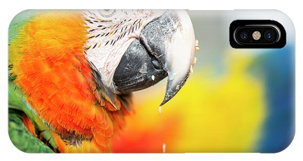 Close Up Of The Macaw Bird. IPhone Case
