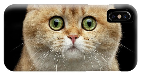 Close-up Portrait Of Golden British Cat With Green Eyes IPhone Case