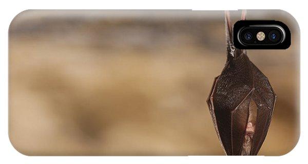 Bat iPhone X Case - Close Up Small Sleeping Horseshoe Bat by Martin Janca