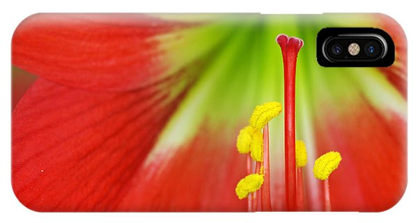 Blossom iPhone Case - Close Up The Stigma And Stamen Of Lily by Decha Thapanya
