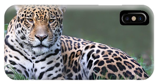 Colombian iPhone Case - Close-up View Of A Jaguar Panthera Onca by Henner Damke