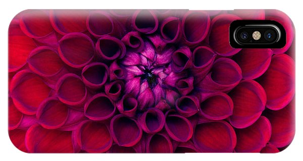 Red-violet iPhone Case - Closeup Of Colourful Flower by Irin-k