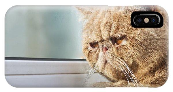 Cute Kitten iPhone Case - Closeup Portrait Photo Of A Cpa Cat by Xiaojiao Wang
