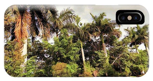 Coconut Trees IPhone Case